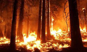 Австралия будет восстанавливаться после пожаров не менее 100 лет