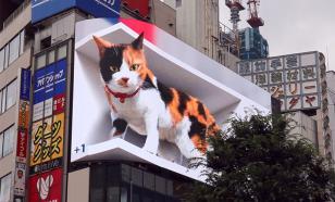 Гигантский 3D-кот поселился на здании в Японии