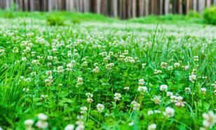 Весна для газона - горячая пора
