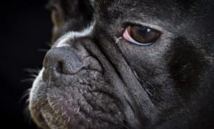 В Карелии собака спасла хозяйский дом от кражи