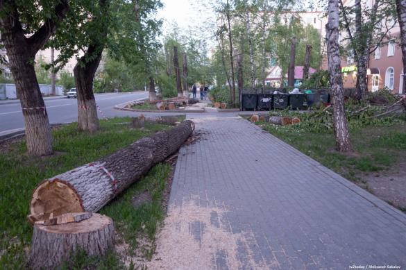 На чиновницу из Томска завели дело за спиленные деревья