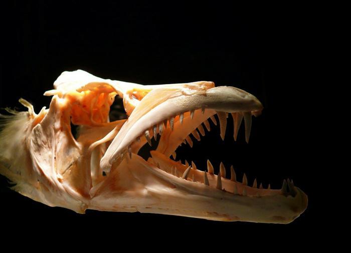 Палеонтологи выяснили, как у млекопитающих появились сложные зубы