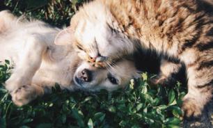 В РФ узаконят права домашних животных, чьи хозяева умерли