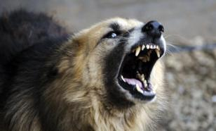 В Бурятии тело младенца отбили у голодных собак