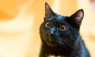 Ученые: кошки могут заразиться коронавирусом