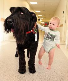 Животное и ребенок: за и против