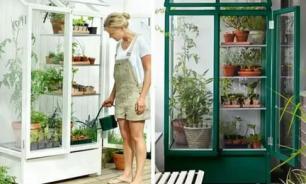 Домашний мини-огород: какие овощи и зелень можно вырастить