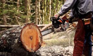 Незаконно вырубленный в Сибири лес обнаружен в магазинах Европы