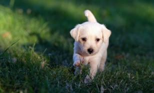 Собаки способны ориентироваться по магнитному полю Земли