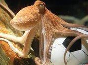 Нового осьминога-предсказателя вывели в свет