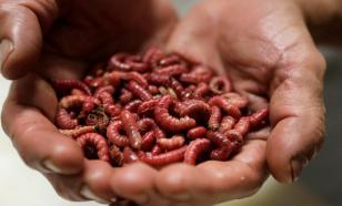 Необычные вакансии: сборщик червей и мастер по обнимашкам