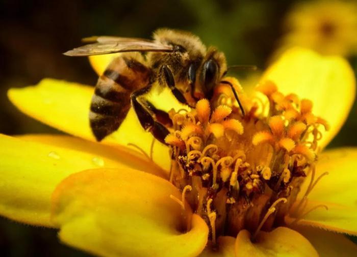 Лучшие растения для привлечения пчел