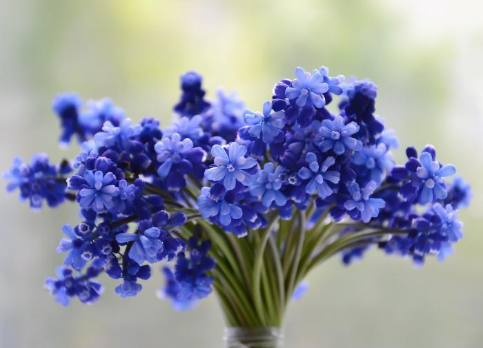 Жириновский призвал не ввозить в Россию импортные цветы
