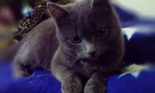 Казахская гостиница открыла вакансию кота