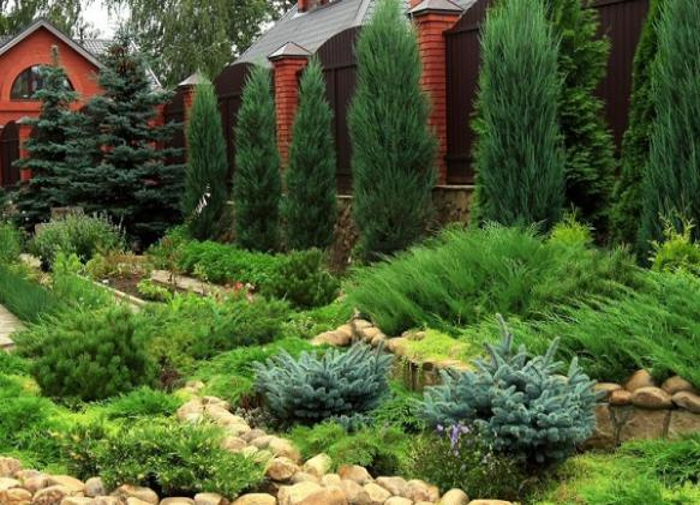 Шесть главных причин выращивать хвойные на даче