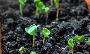 Что можно посадить на зиму в открытый грунт