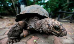 Установлен новый мировой рекорд в скорости бега для черепах