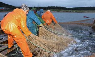 В 2050 году морскую рыбу будут ловить на морских плантациях