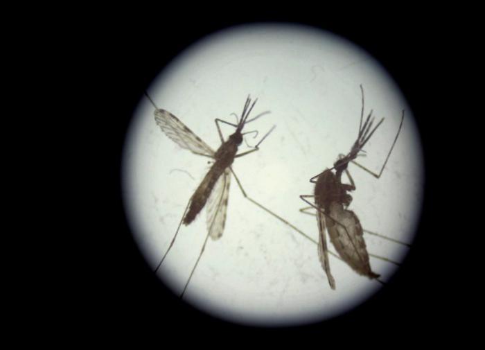 От 30 миллионов случаев до нуля: Китай победил малярию