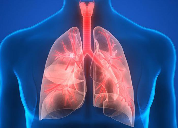 Влияние COVID-19 изучили на искусственных лёгких