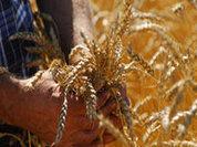 Паника вокруг зерна преувеличена