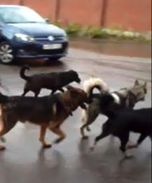 В Калуге нашли новое решение проблемы бездомных животных