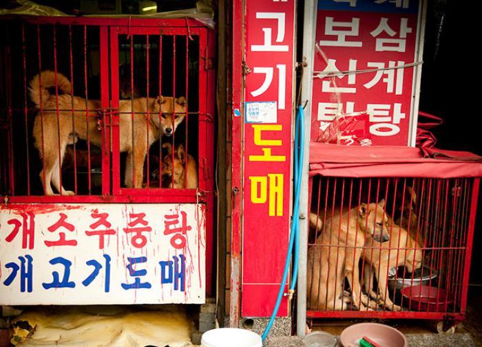 Кореевед: в Северной Корее не принято держать в доме собак. Их там едят