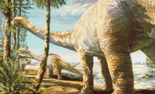 В Бурятии найдены останки динозавра, жившего 120 млн лет назад