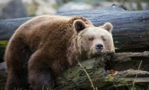 Сахалинец спасся от медведя, притворившись мёртвым
