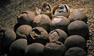 В Китае нашли эмбрион неизвестного существа возрастом 609 млн лет