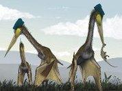 Какое счастье, что птерозавры вымерли!