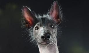 Собачий мир: самые интересные породы метисов