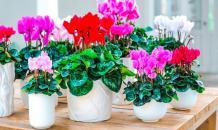 Открытие: комнатные растения не очищают воздух в помещении
