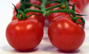 Японцы начали лечить гипертонию помидорами с усиленным геномом