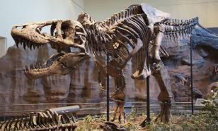 Палеонтологи: тираннозавры жили стаями