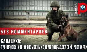 Балашиха: Тренировка минно-розыскных собак подразделений Росгвардии (эксклюзив Pravda.ru)