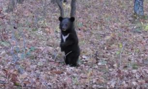 Гималайских медвежат, оставшихся без мамы, выпустили в дикую природу