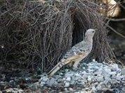 Птицы умеют создавать оптические иллюзии