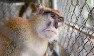 Китайские ученые создали обезьяну-аутиста... для опытов