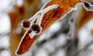 В Смоленской области из-за заморозков объявили штормовое предупреждение