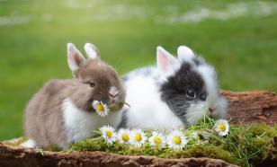 Что нужно для содержания декоративного кролика