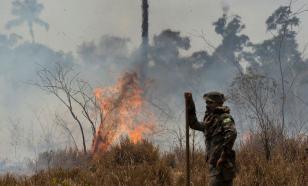 В Чернобыльской зоне сгорело более 11000 гектаров леса