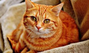 Кот Рыжик из Всеволожска заразился COVID-19