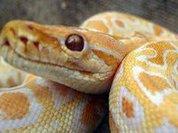 Хорошее зрение подарили нам змеи