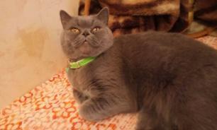 Кошку, лечащую от похмелья, продают за 15 млн рублей