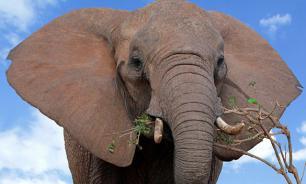 Опубликовано видео, как голодный слон забрел в школьную столовую