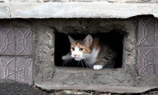 Минстрой запретил убивать кошек в подвалах жилых домов