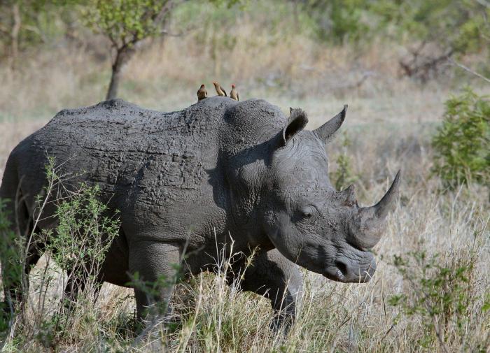 В Крыму нашли кости древнего носорога