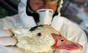 Загадочный мор птиц в Крыму: Украина, отрава или птичий грипп?
