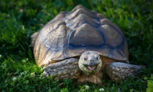 Открытие: сухопутные черепахи оказались общительными и обучаемыми